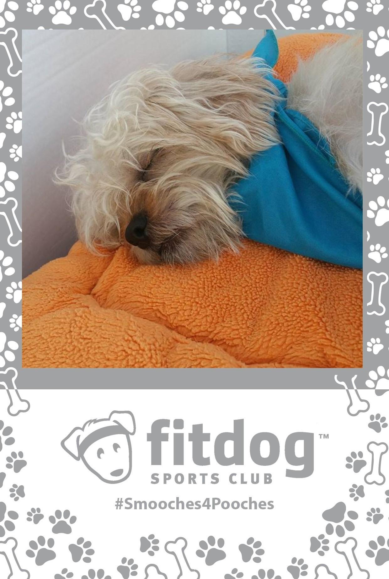 Fitdog sports Photo Print